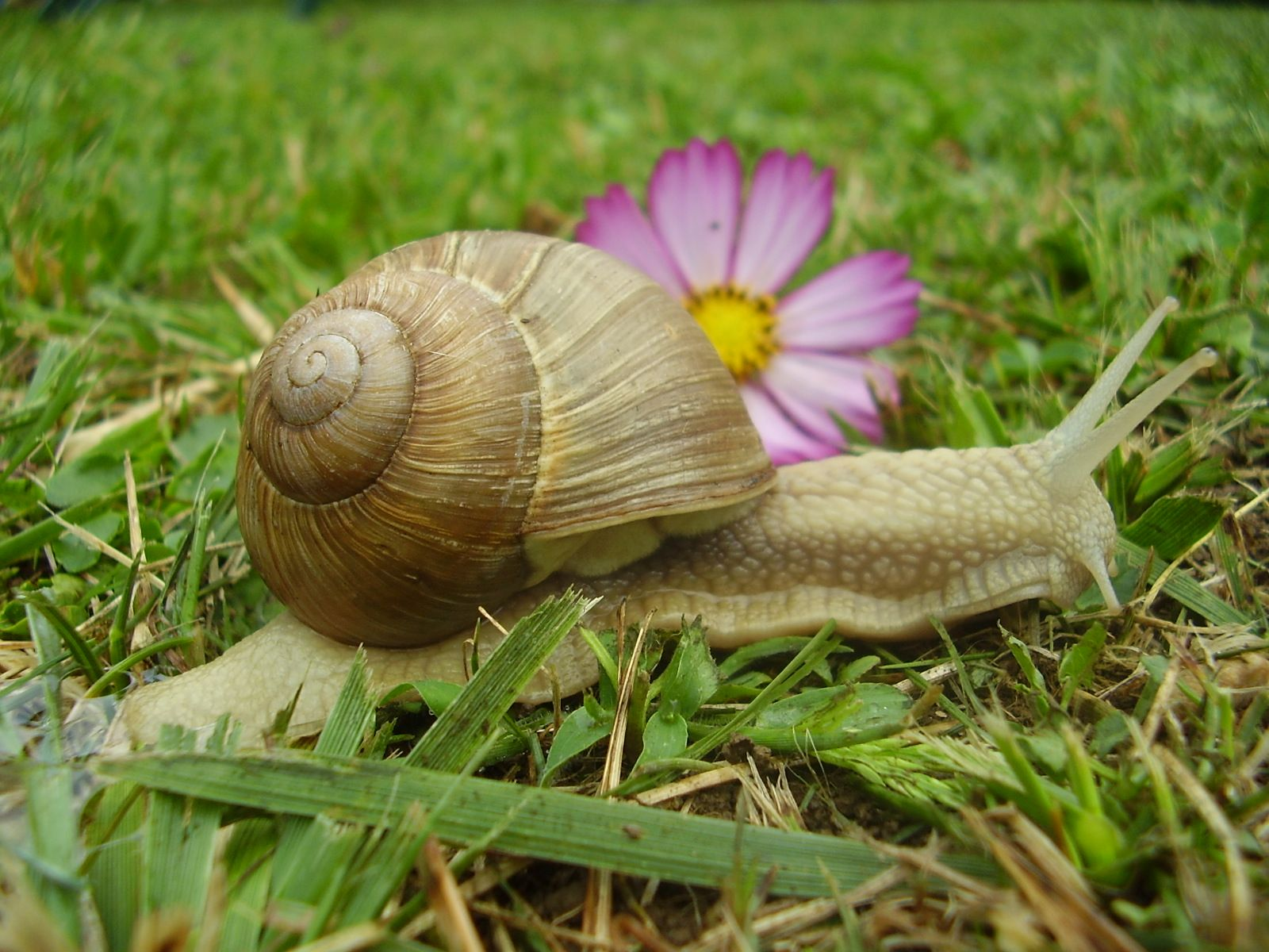May 24 National Escargot Day I don't have a recipe but