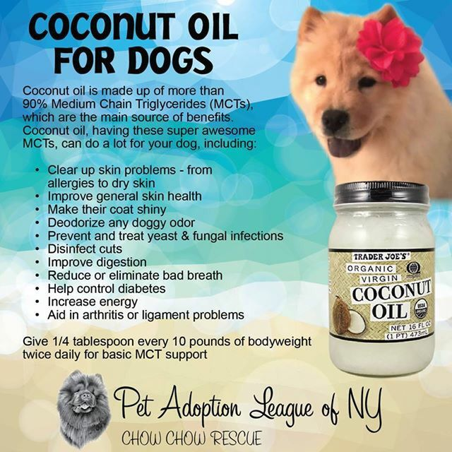 Coconut Oil For Humans And Dogs Palny Chow Chow Rescue Coconut