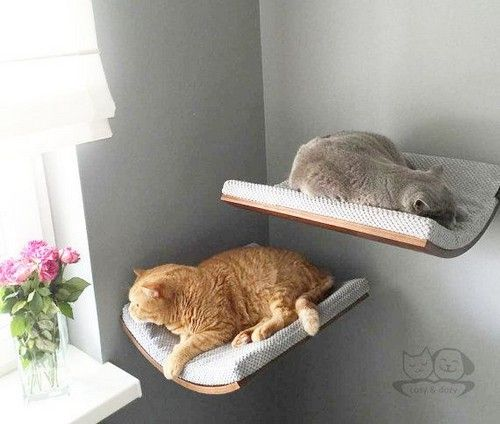 Cat Accessories Cat Shelves Cat Furniture Pet Design Cat Bed Grey Cat Bed  Maplewalnut And Wenge Shade Of Wood Cappuccino Fabric