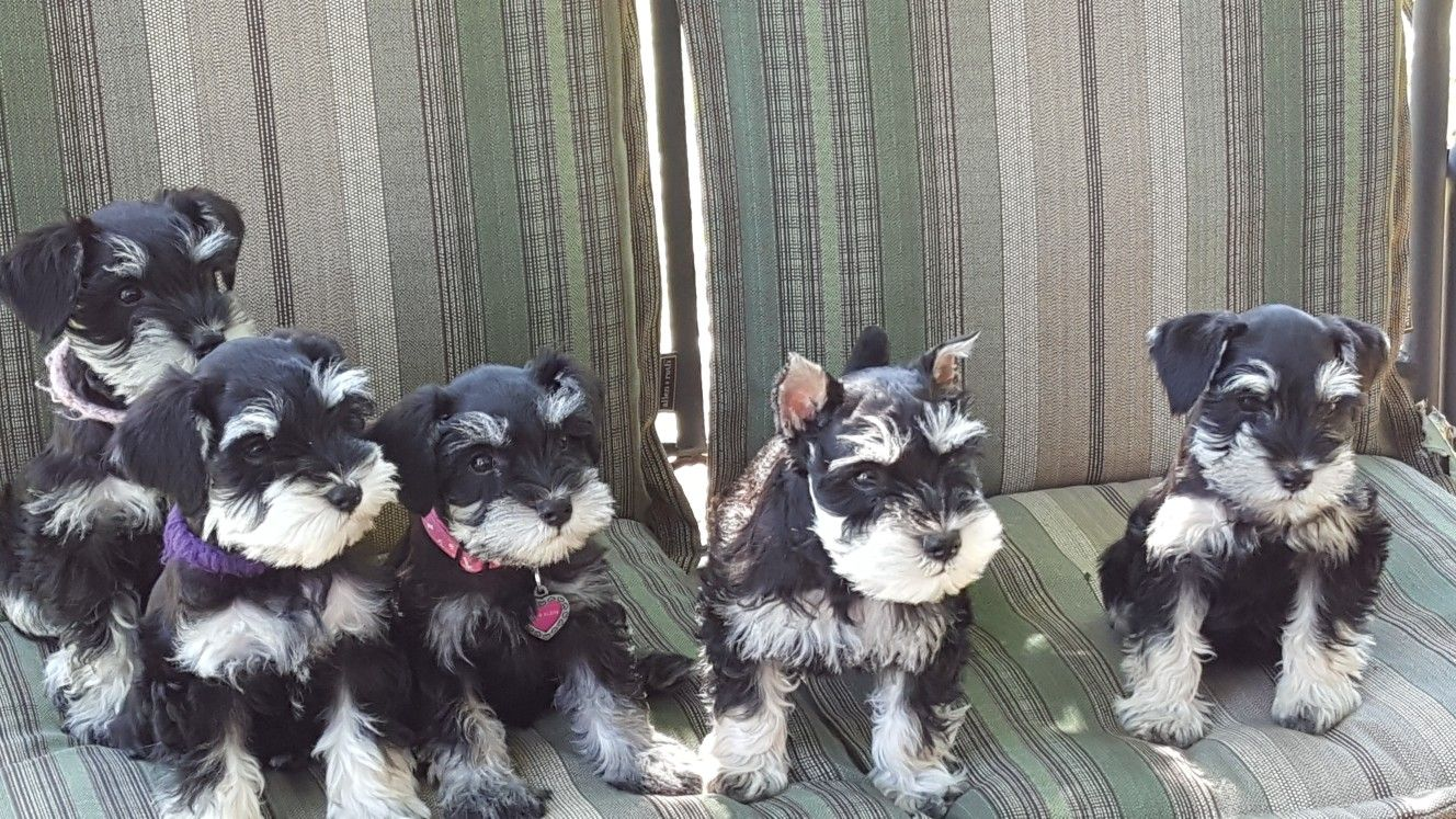 Sadie S First Beautiful Litter Of Puppies So Proud Of My Girl Puppies Animals Sadie