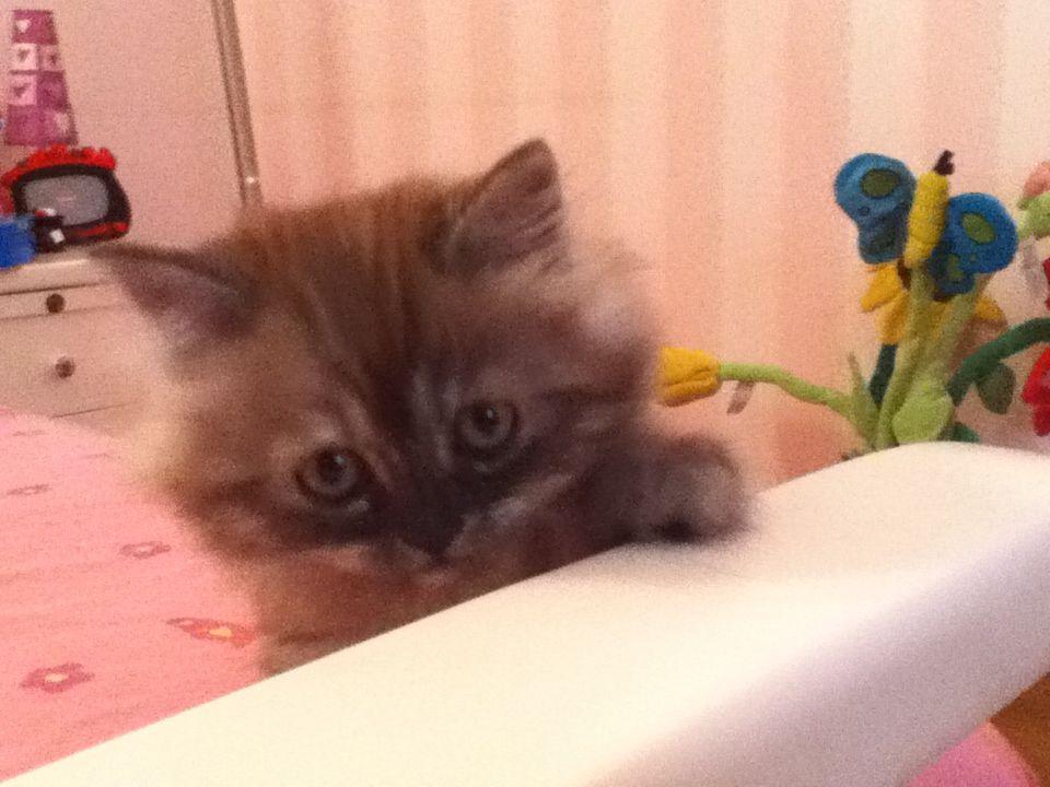 Kittyyy <33