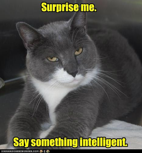 Surprise Me Say Something Intelligent Funny Animals Funny Cat Pictures Funny Animal Pictures