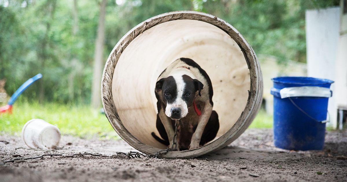 140 The Aspca At Work Ideas Aspca Animals Animal Cruelty