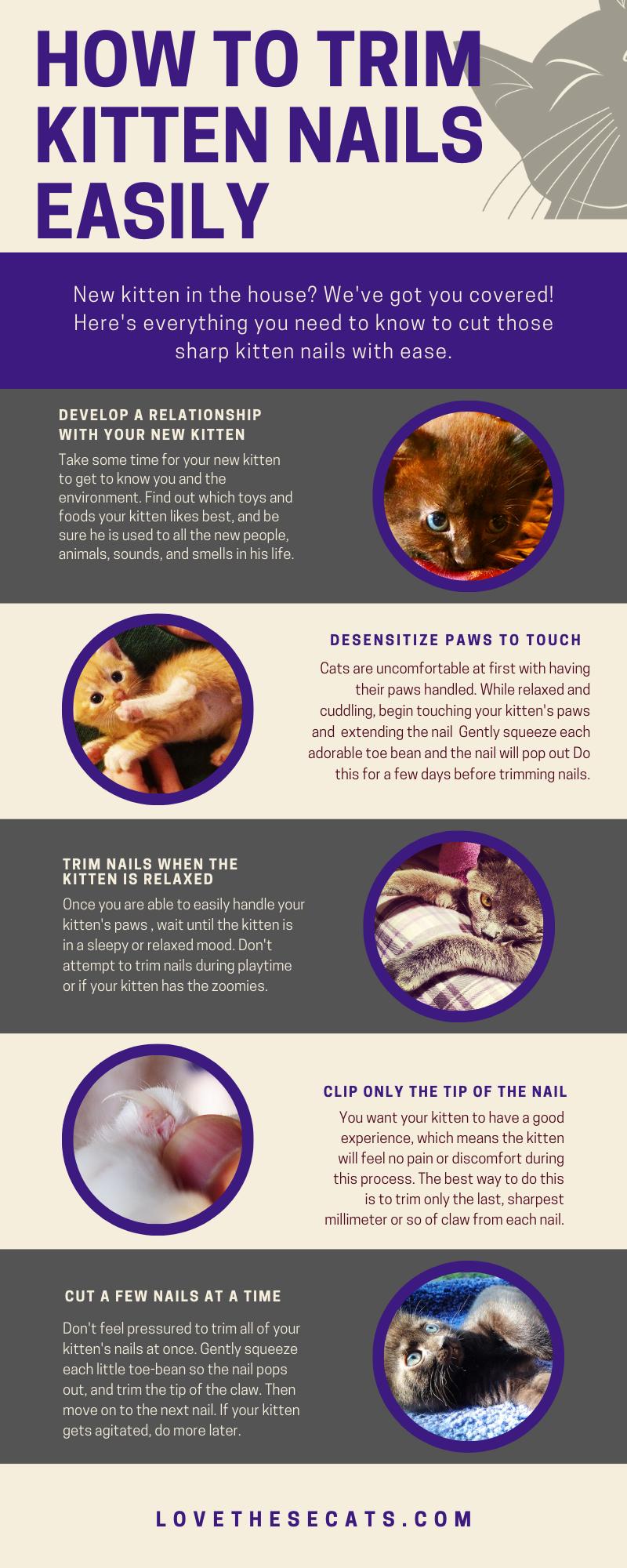 Pin On Kitten Development