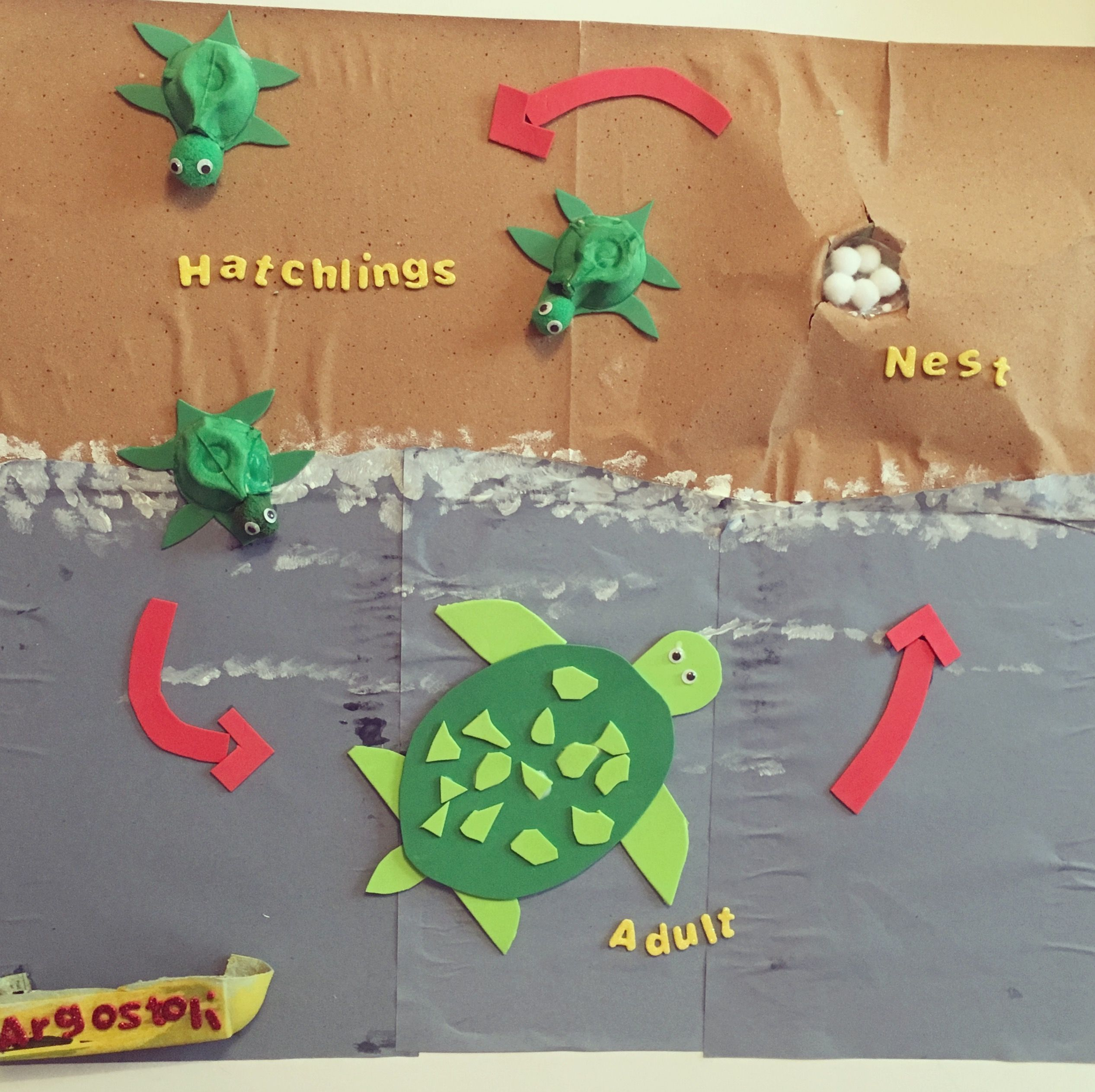 Turtle Life Cycle Craft Activity Turtle Lifecycle Ks1