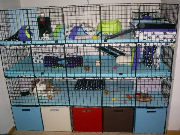 Awesome ideas for guinea pig hutch and cages pet for Amazing rabbit cages