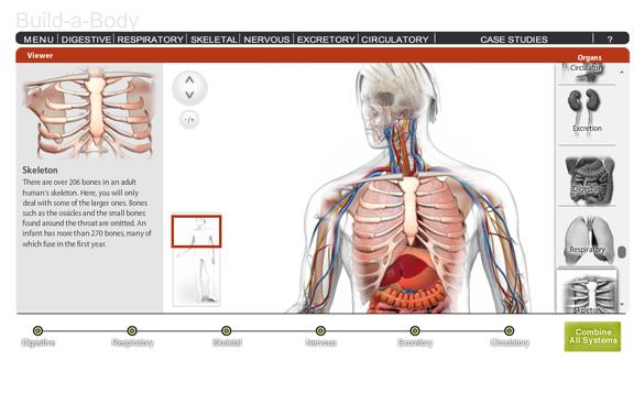 Build-A-Body Online Game | Health | Pinterest | Biología, Geología y ...