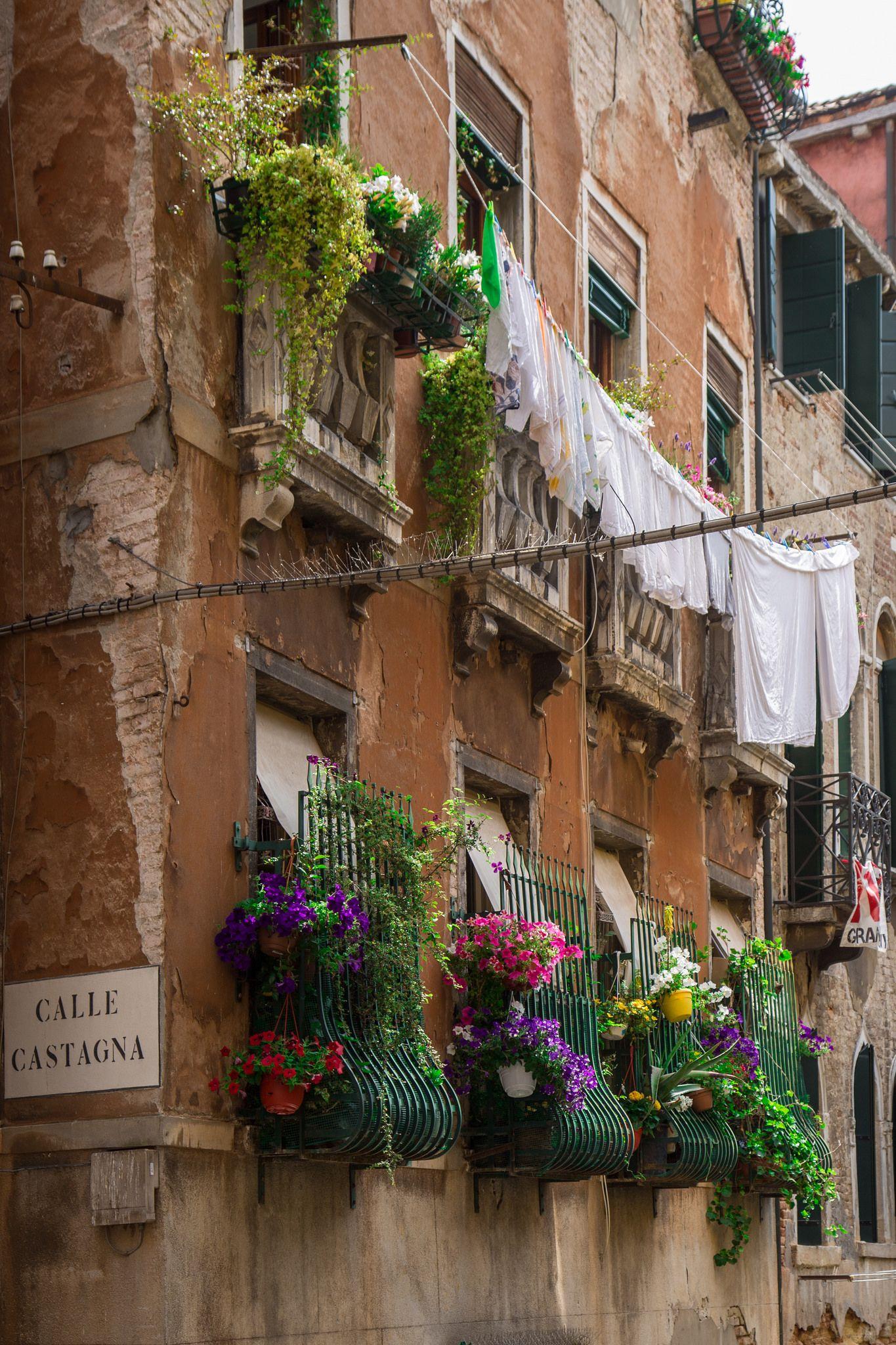 Масло Венеция ФИОЛЕТОВЫЕ ЦВЕТЫ | 2048x1365