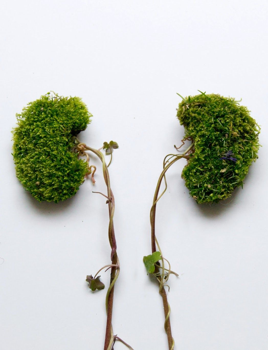 Simply Creative: Wild Plant Human Organs by Camila Carlow | Arte y ...