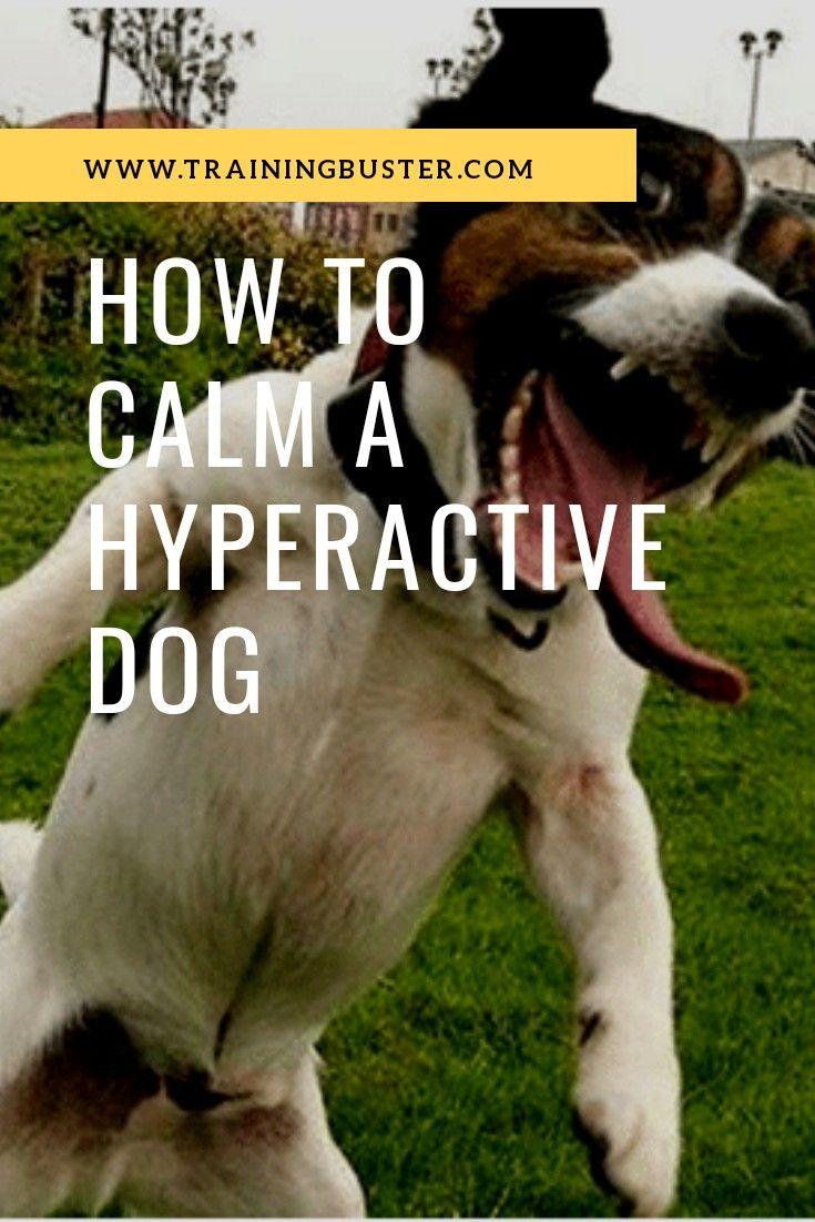 Calming a hyperactive dog dog advice hyperactive dog