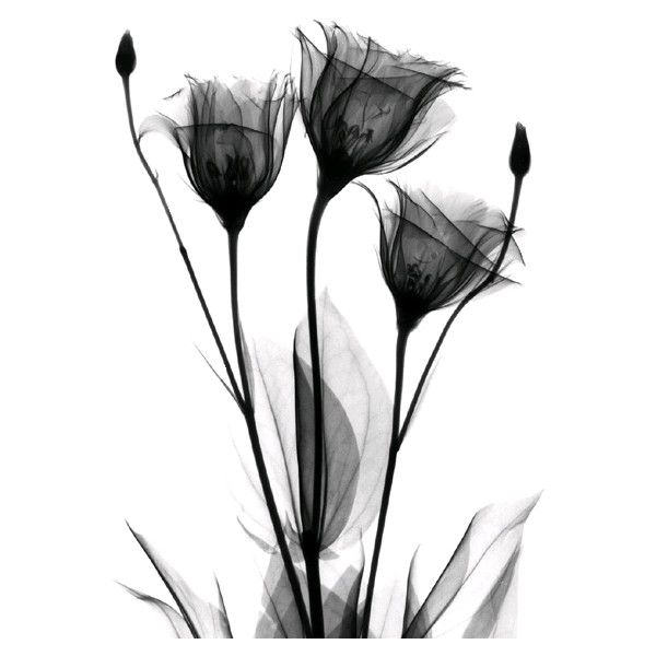 трубка цветка - Page 3 ❤ liked on Polyvore featuring flowers, backgrounds, fillers, black, decorations, effects, textures, quotes, wallpaper and saying