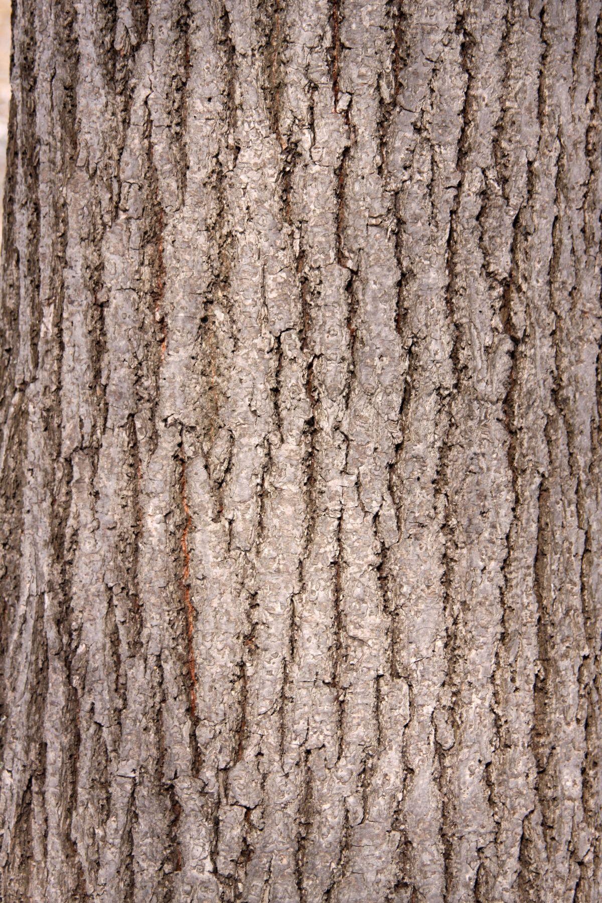 картинки кора дерева