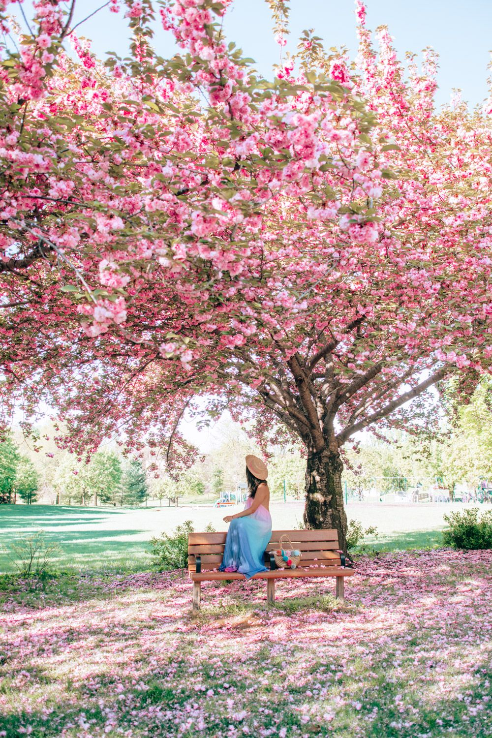 5 Magical Places To See Cherry Blossoms In Maryland With Kids Cherry Blossom Japan Cherry Blossom Wallpaper Blossom Garden