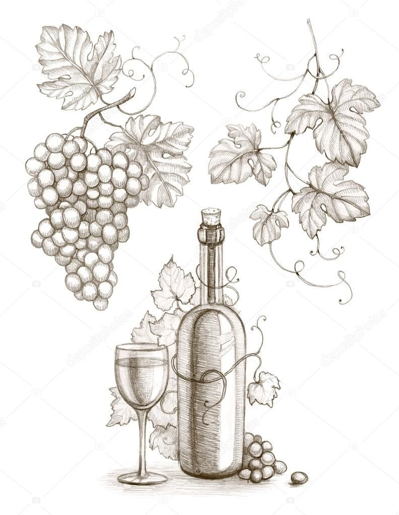 Download royalty free pencil drawing of wine bottle and grape stock photo 23871305 from depositphotos collection of millions of premium high resolution