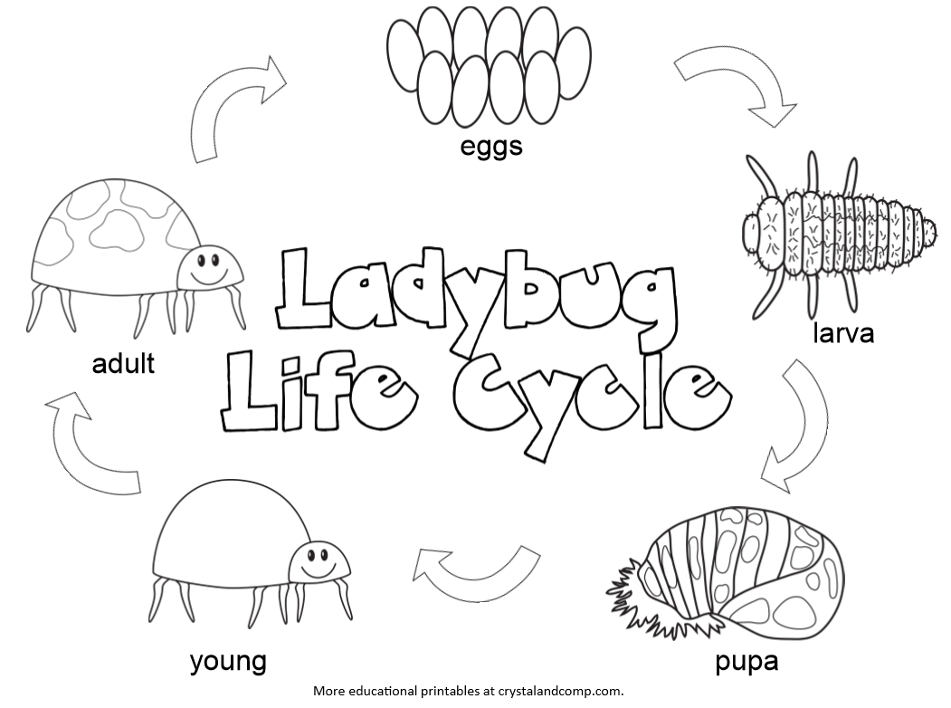 Kid Color Pages: Ladybug Life Cycle | Life cycles, Life ...