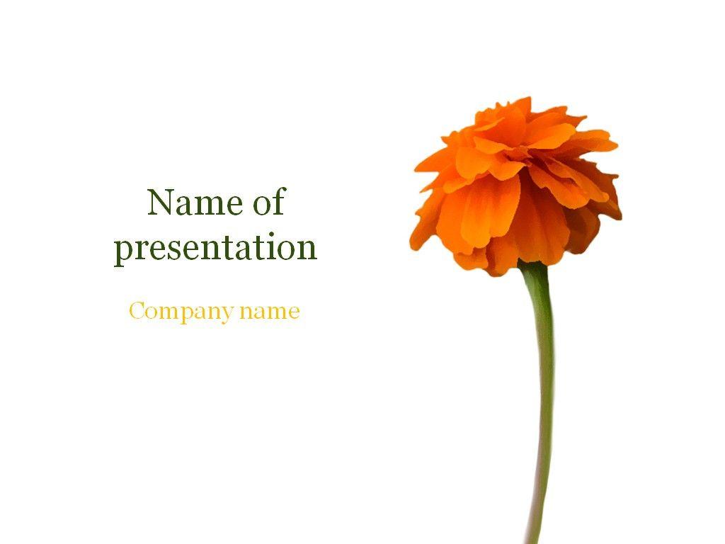 flower powerpoint template | templates | pinterest, Modern powerpoint