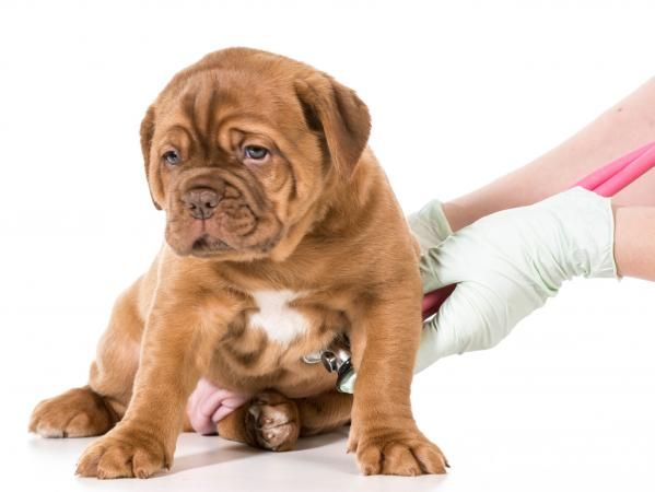 Blood And Mucus In Dog Stools Blood In Puppy Stool Puppies Dogs