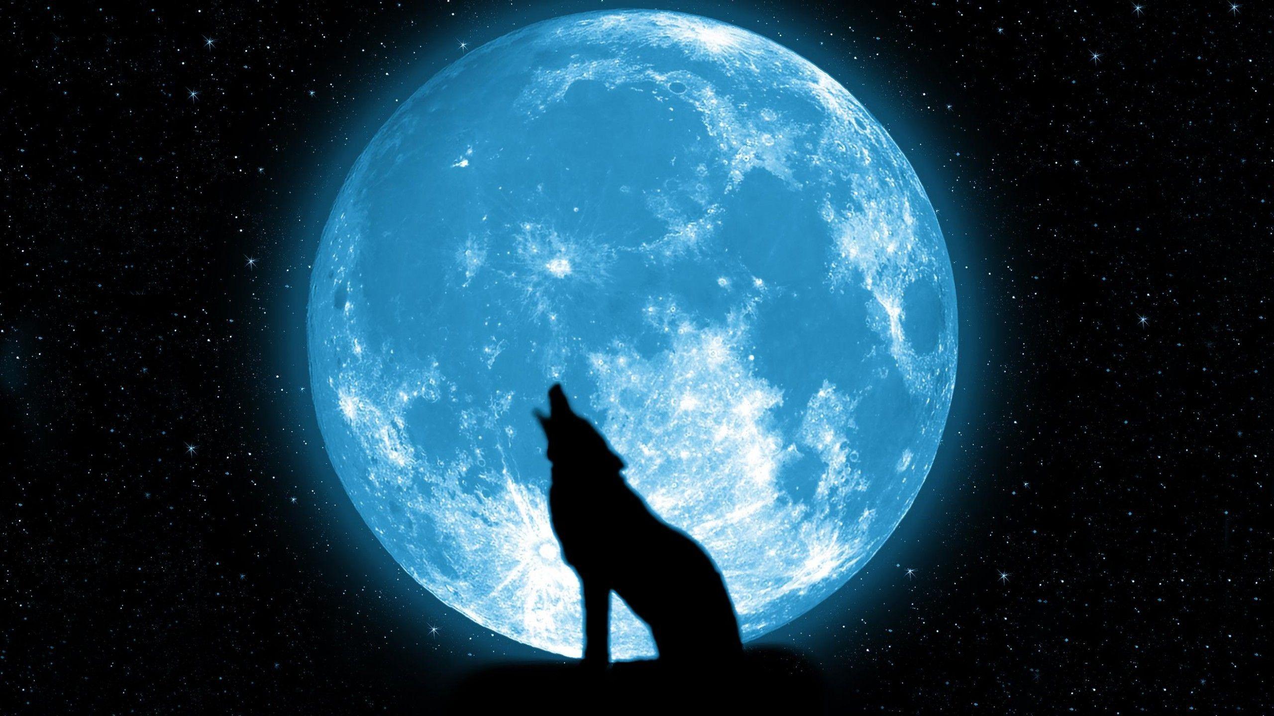 Howling Wolf Wallpapers Widescreen For Desktop Wallpaper