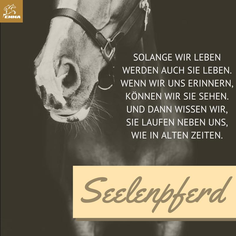 Pferdespruche Pferdepflege Emma Pferdefuttershop De 12 Pferde