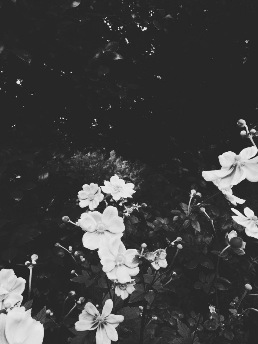 vsco flowers aesthetic flower artsy collage grid texture gray saved pretty