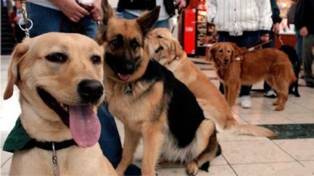El escándalo de los falsos #perros guía en #EEUU http://bbc.in/1H31NdG