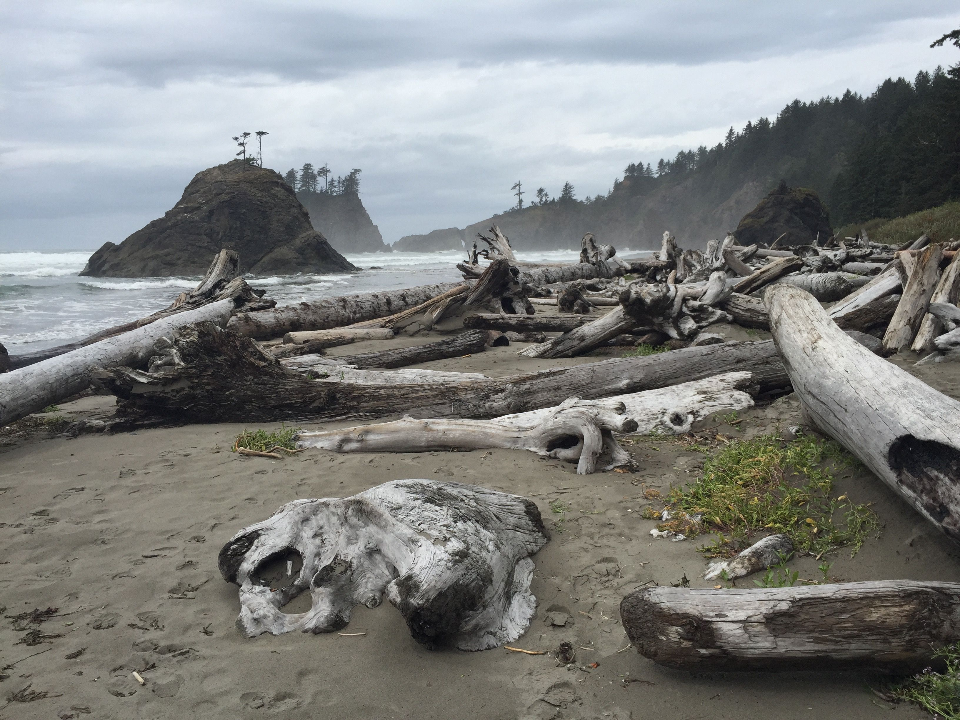 La Push Beach In Olympic National Park