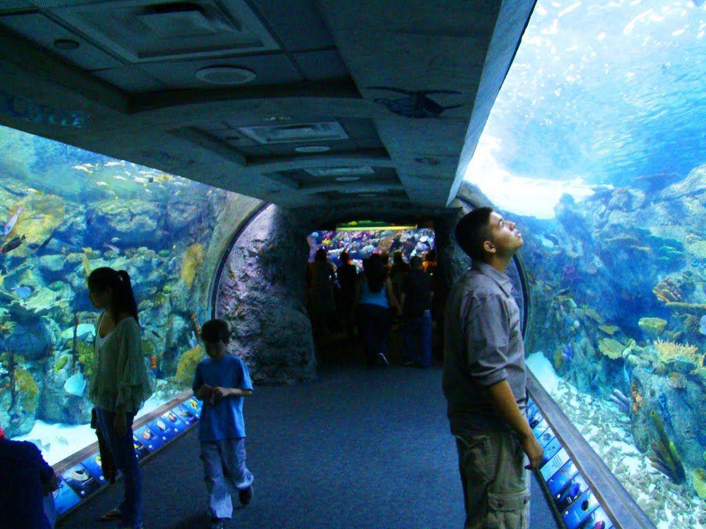Long beach aquarium of the pacific long beach aquarium