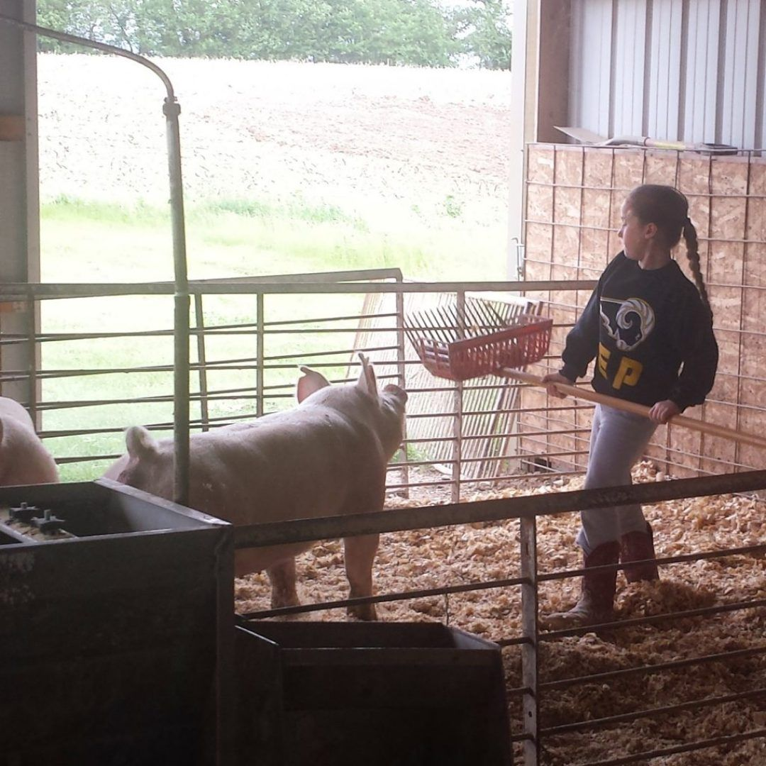 12 Life Lessons Reinforced in a Barn Life lessons, Pig