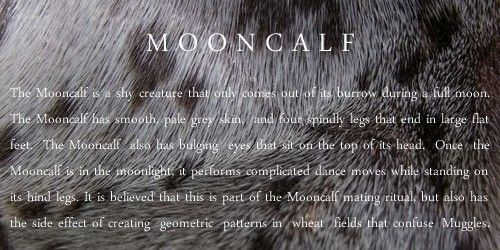 M A G I C A L C R E A T U R E S: Demiguise, Mooncalf, Thunderbird, Niffler …