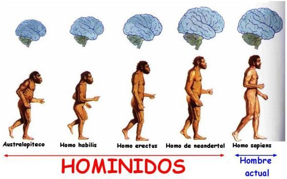 Pin En Trabajo De La Evolucion Humana