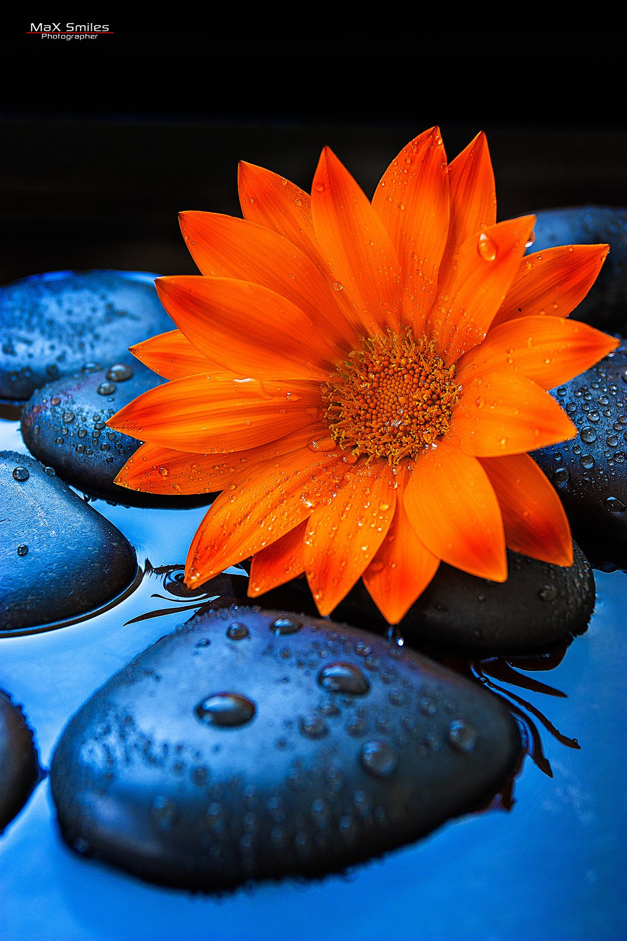 Flower 01 By Max Smiles On 500px Orange Aesthetic Blue