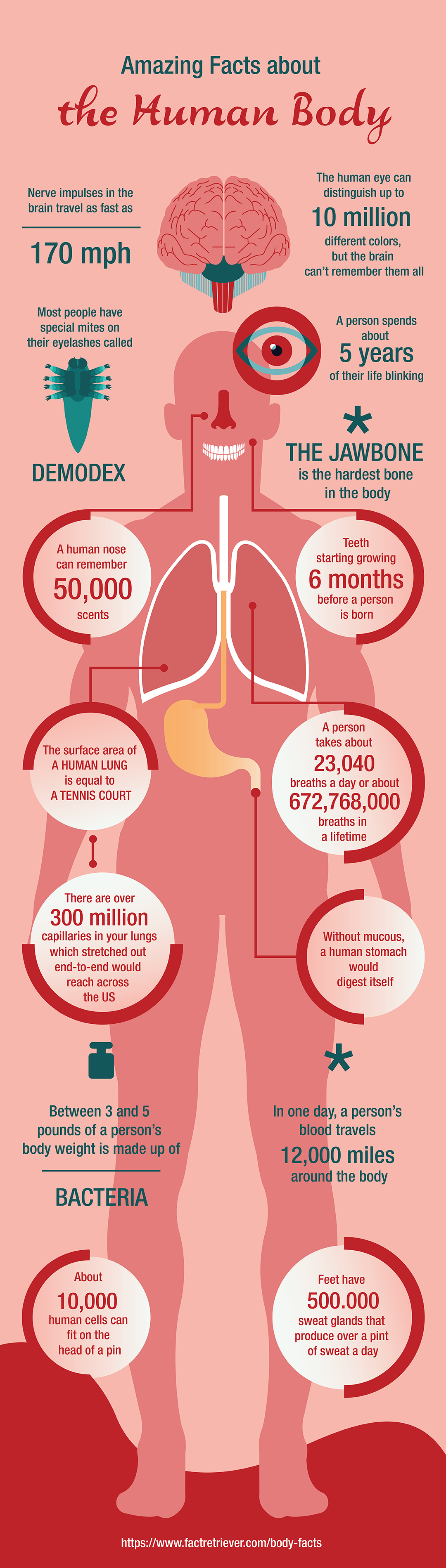 84 Interesting Facts About The Human Body Facts Pinterest