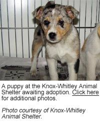 Knox whitley animal shelter
