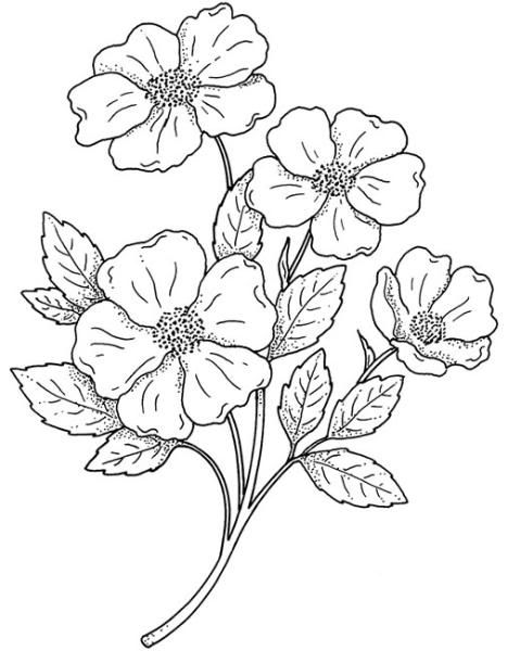 File Edit Share Copy To My Album Zoom In 89 Flower Drawing Embroidery Flowers Pattern Coloring Pages