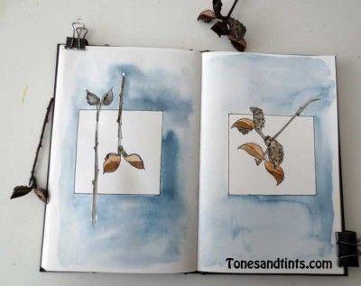 Drawing Seeds or Pods - tonesandtints