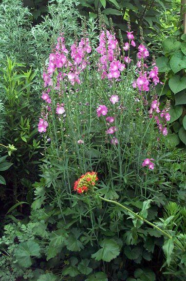 pin by grace kreuser on plant ideas