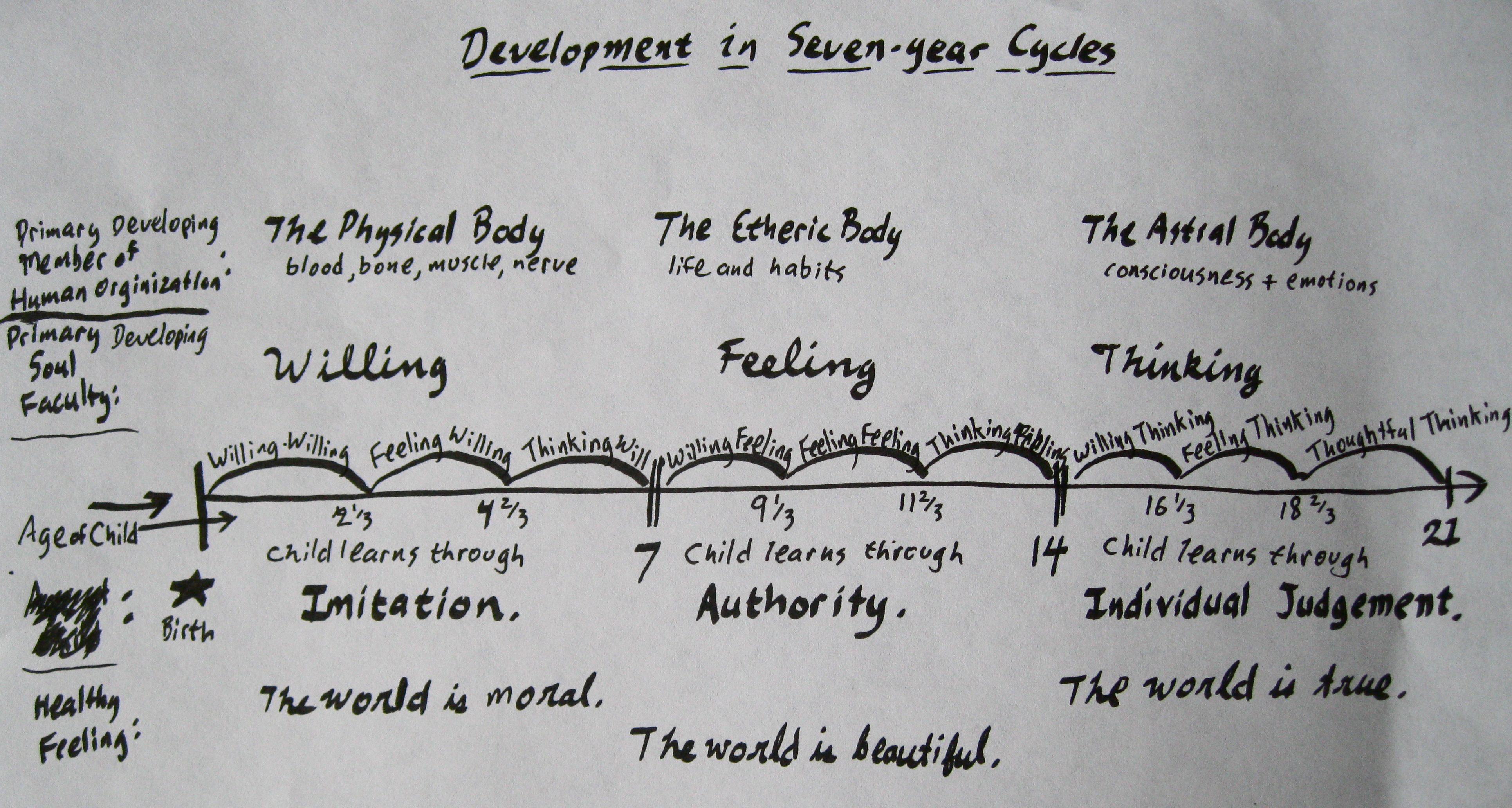 Seven Year Cycles And Subcycles Of Development Waldorf Education Rudolf Steiner Thoughts On Education