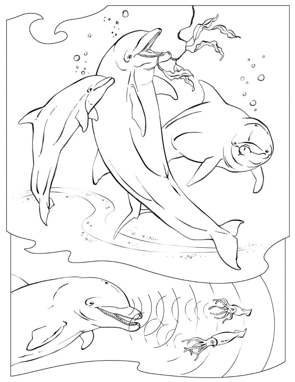 Coloring Book Animals A To I Dolphin Coloring Pages Animal