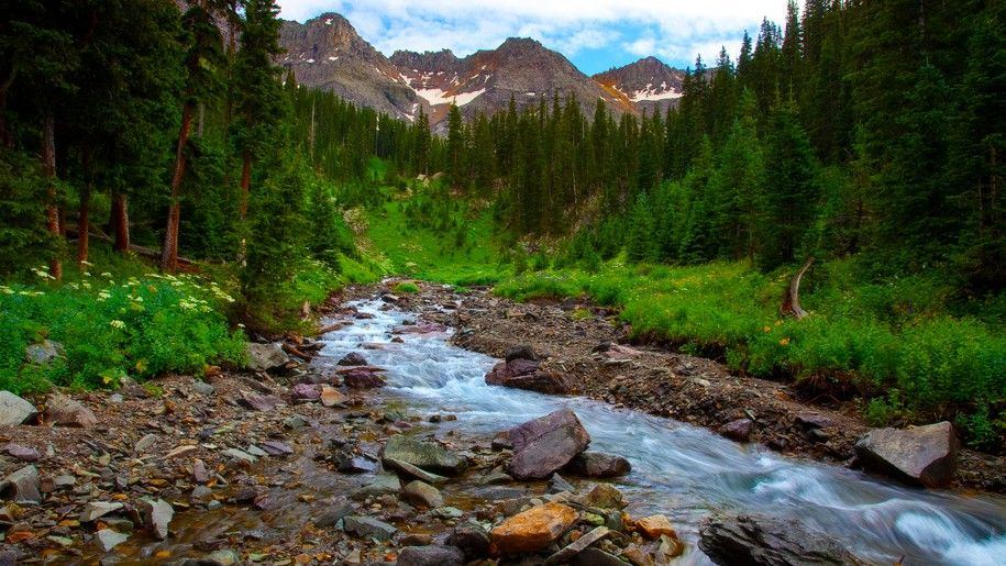 Spring Landscape River Mountain Flowers Pine Forest Hd Wallpapers Fotos Montanas Pina