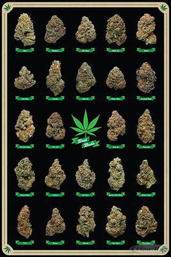 Pin by The Rolling Paper Company on Marijuana infographics ...