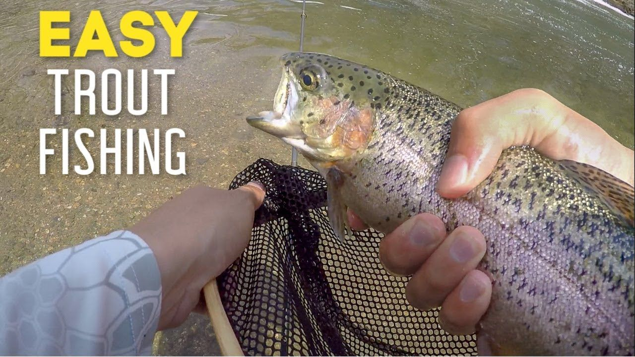 The BEST BAITS for Stocked Trout Fishing! How to Catch
