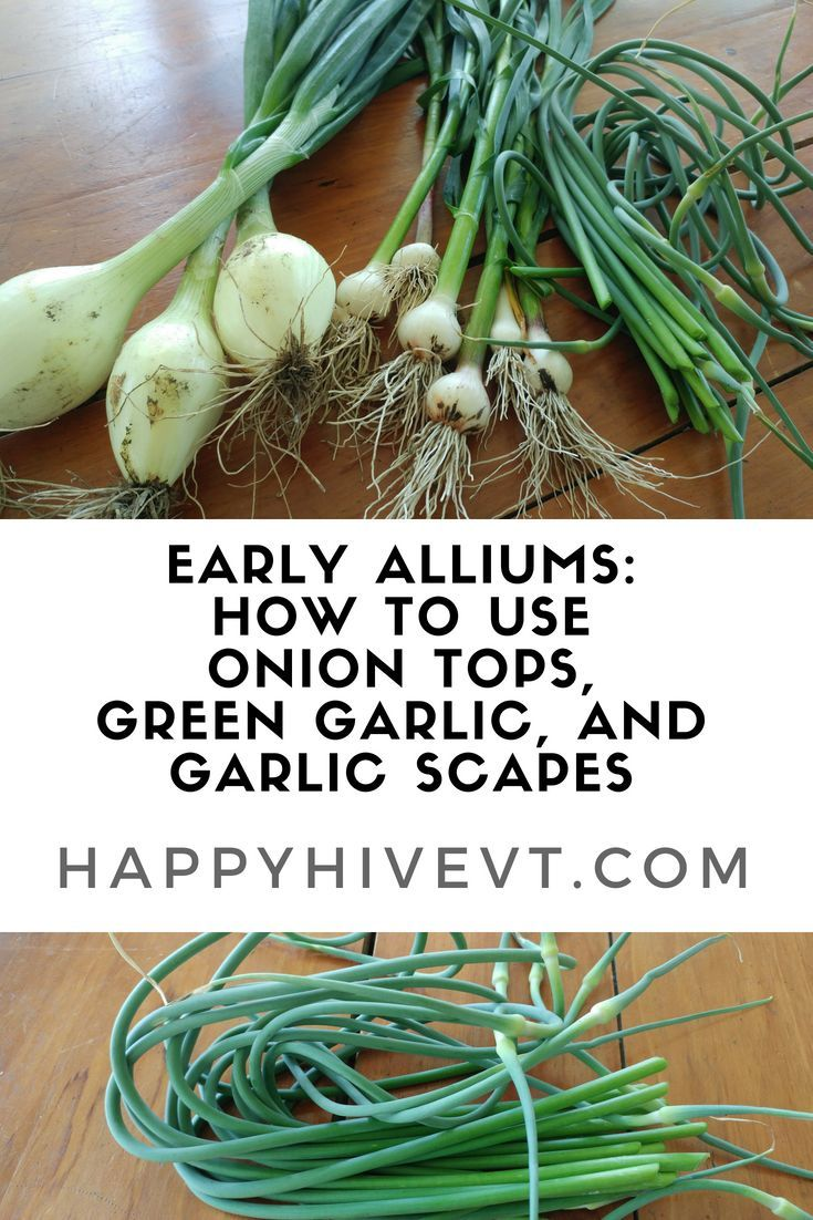 Growing Greener in the Pacific Northwest: Garlic, Shallots
