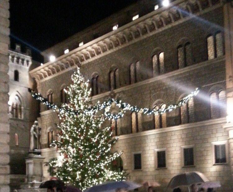 L'Albero di Siena
