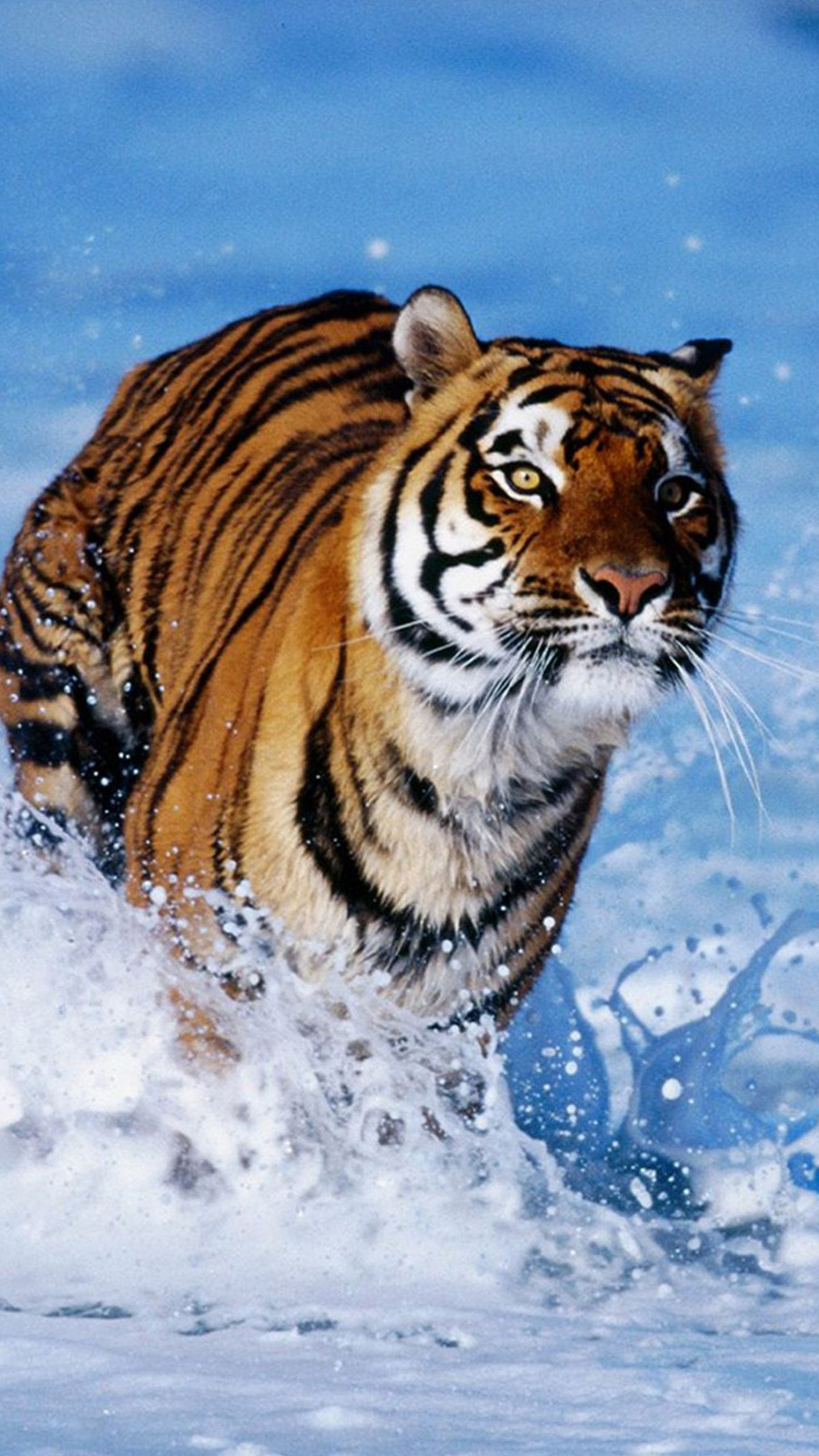 Pin by aashqalmadi on Animals Animals, Tiger, Wild cats