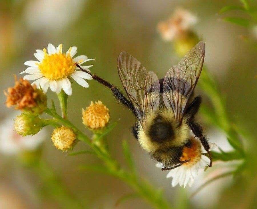 Pin von Barbara rathmanner auf Bienen ☀️☀️☀️ (mit Bildern ...