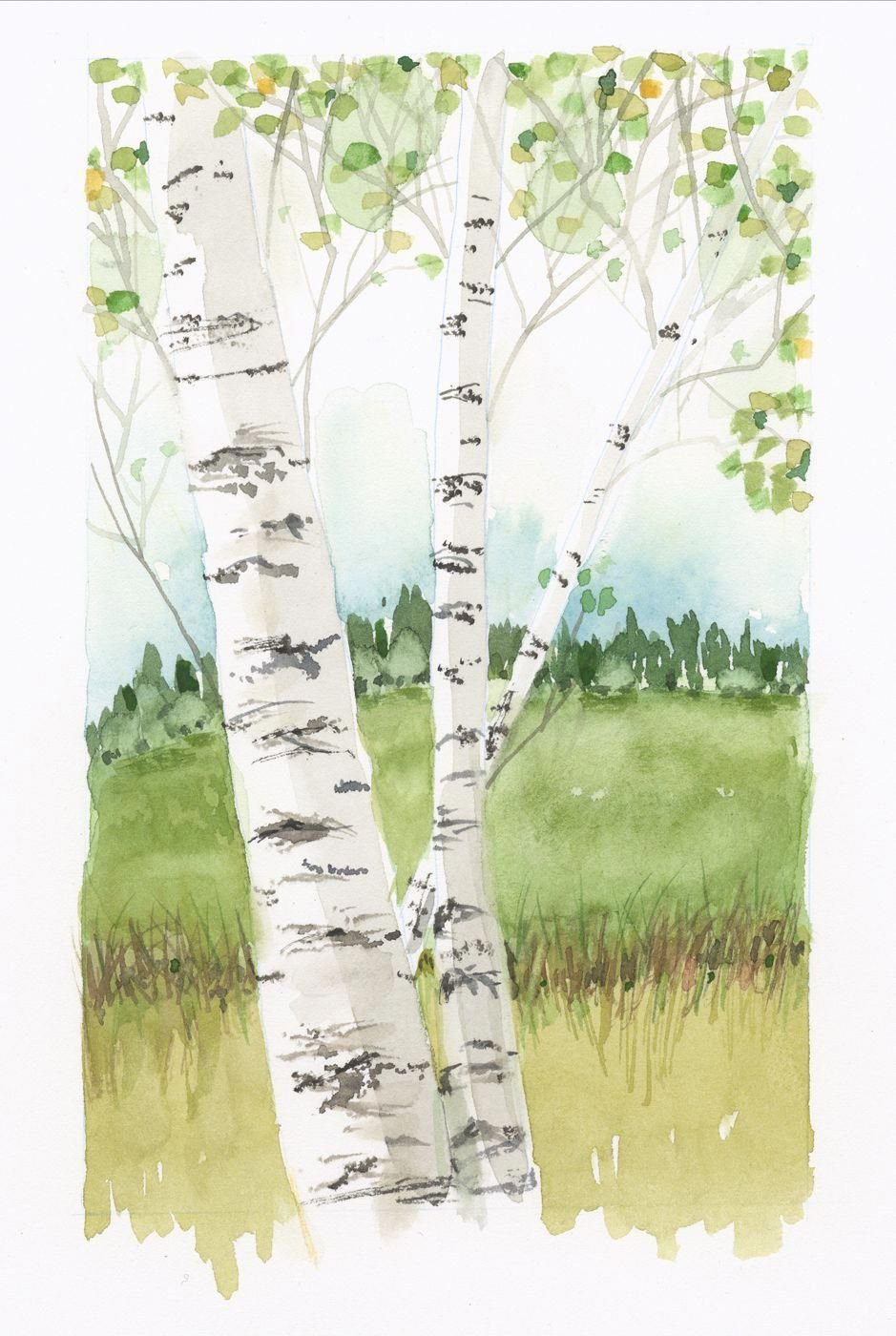 Jake Marshall Watercolor Birch Trees In Spring Watercolor
