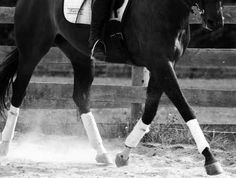 The Art of Slowing Your Horse's Leg Speed Without Losing Energy - Horse Listening