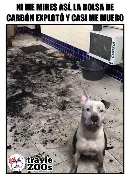 Deberias Agradecerme Que Estuve Aqui Para Vigilar Tu Casa Memes Perros Perros Graciosos Perros Chistosos
