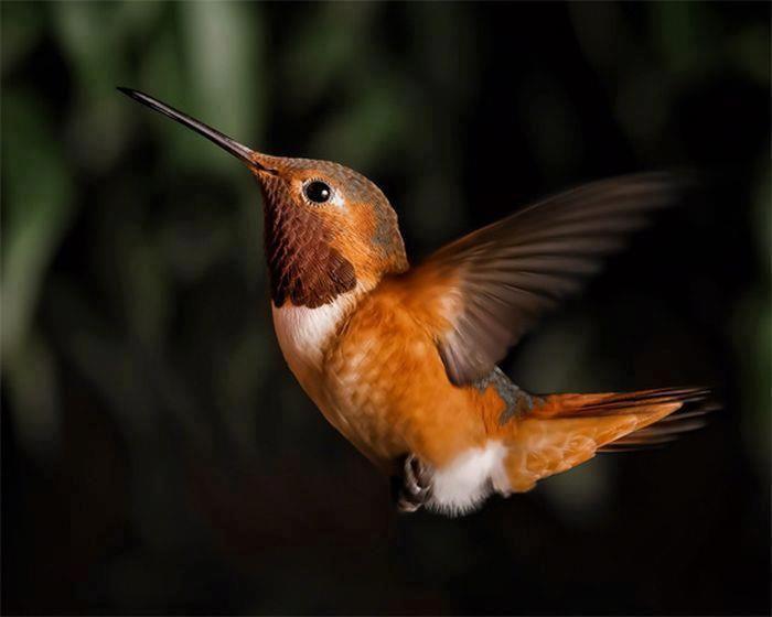 Hummingbird.  They are so beautiful!  5/6/13