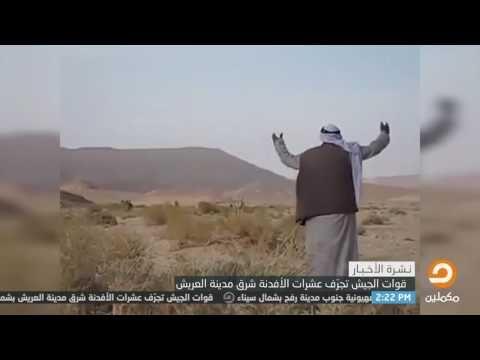 قوات الجيش تجرف عشرات الأفدنة من شجر الزيتون شرق مدينة العريش Egypt